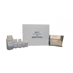 BioMaxiTM Blood RNA Purification Kit