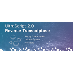 UltraScript 2.0 cDNA Synthesis Kit Separate Oligos