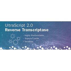 UltraScript 2.0 Reverse Transcriptase