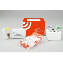 EchoLUTION Blood DNA HiYield Kit (10)