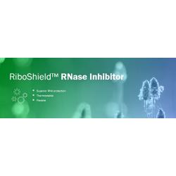 RiboShield™ RNase Inhibitor